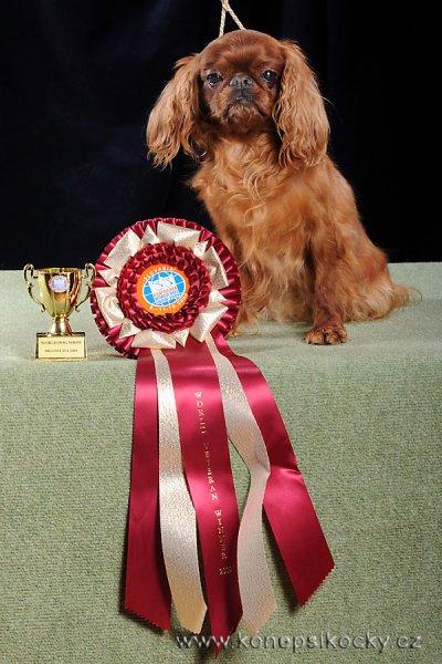 Inaja Bohemia Zlatava-World Veteran Winner-Best Veteran 2009 Bratislava
